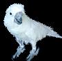 Ava BirdGuard