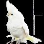 Bella Birdguard