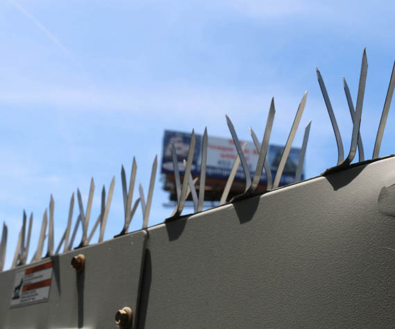 Bird Spikes on Box