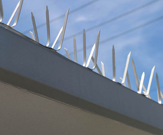 Bird Spikes on Signage