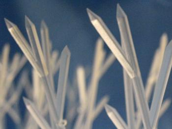 Plastic Bird Spike Strips