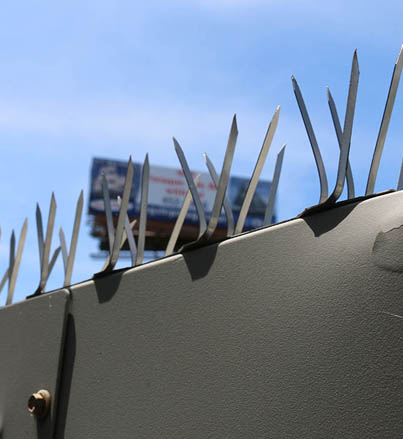 Bird Spikes installed on a sign